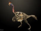Corythoraptor jacobsi_20171012.jpg